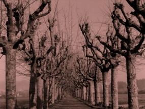Camiño da Granxa I